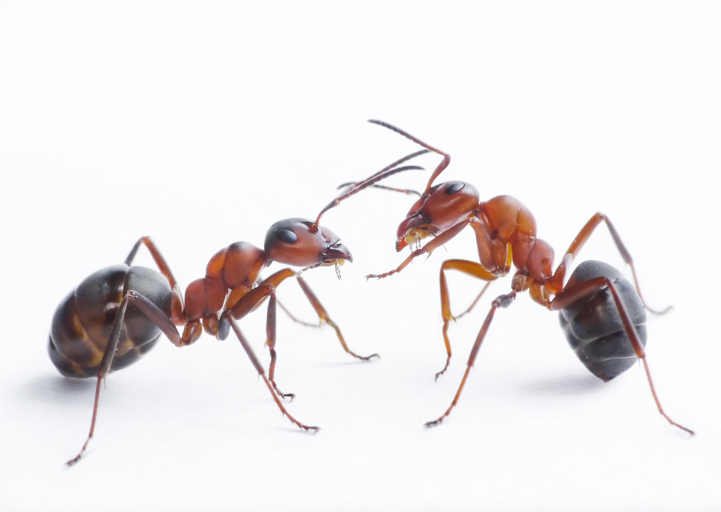 Как сделать чтобы муравьи не сбегали