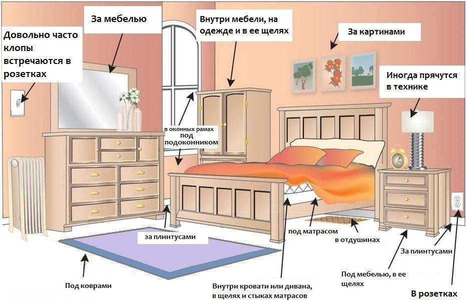 Чем можно вывести клопов в квартире